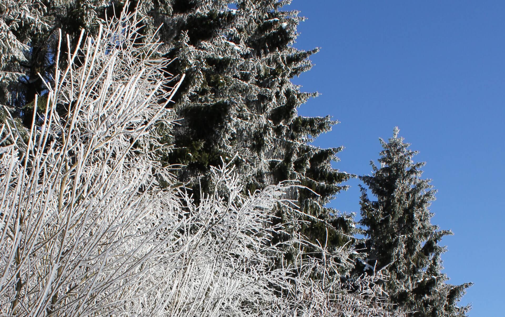 Skiurlaub in Winterberg im Hostel Erlebnisberg Kappe
